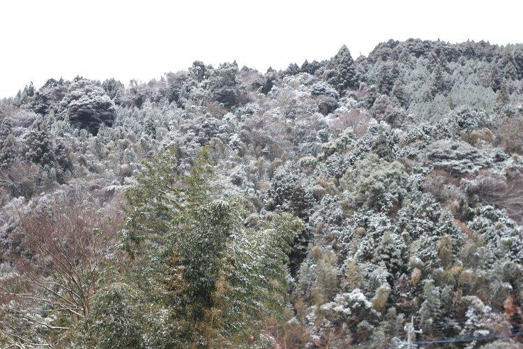 積雪 雪景色